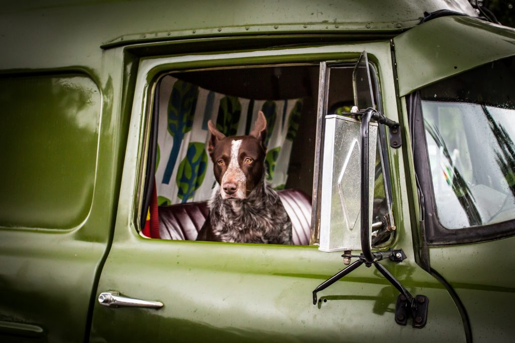 Dog sits in the passenger seat of semi truck